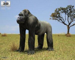 max gorilla troglodytes