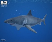3ds carcharias carcharodon great