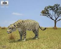 onca panthera c4d
