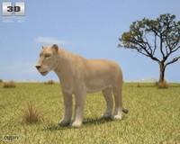 lion leo lioness 3d 3ds