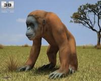 borneo orangutan pongo 3d model