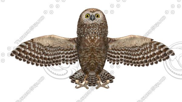 3d model of owl beak feather