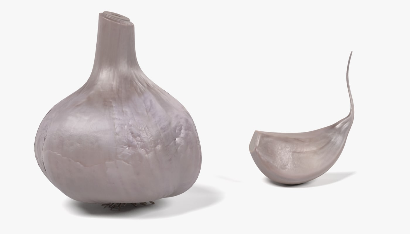 3ds garlic allium sativum