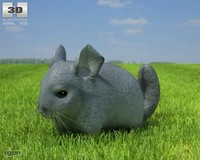 3d model chinchilla