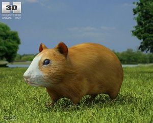 3d model cricetinae hamster