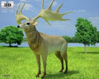 3d model elk giganteus irish