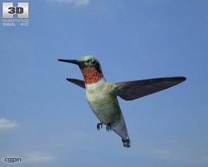 3d bee hummingbird bird model