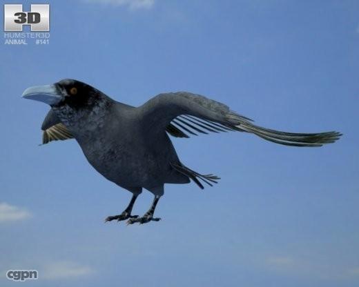 3d common raven corax