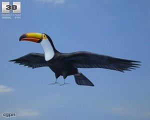 toucan ramphastos toco 3d model