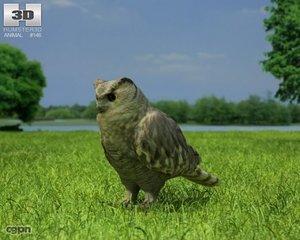 asian bubo eagle max