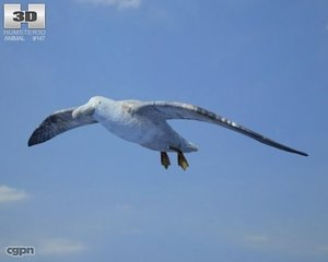 giant petrel macronectes 3d model
