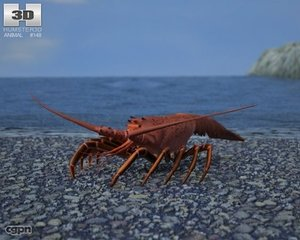 3d lobster palinuridae spiny
