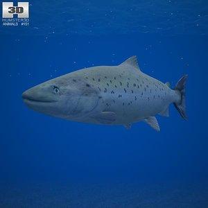 3d atlantic salmon model