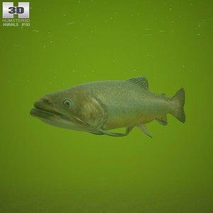 brook trout 3d model