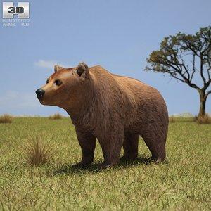3d brown bear
