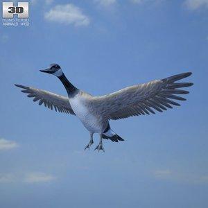 3d canada goose