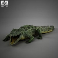 crocodile rigged 3d c4d