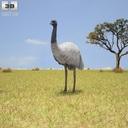 Emu 3D models