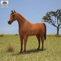 c4d horse