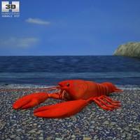 3d lobster