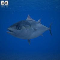 3d atlantic bluefin tuna