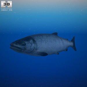chum salmon 3d max