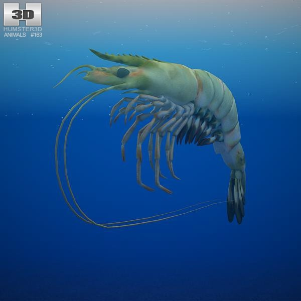 giant tiger prawn 3d model