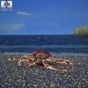 3d model red king crab