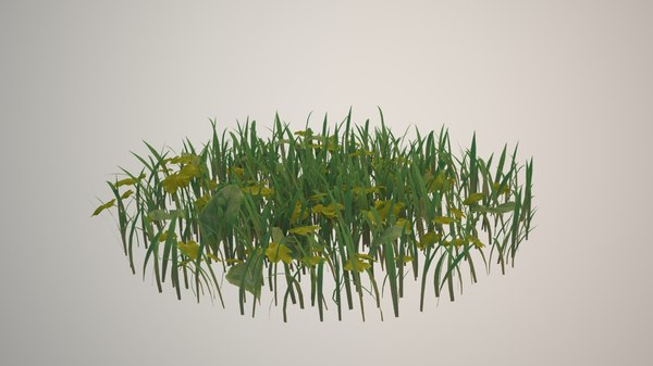 vegetation ground max
