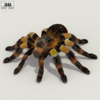 rigged tarantula 3d model
