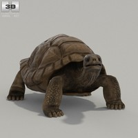 galapagos rigged turtle 3ds
