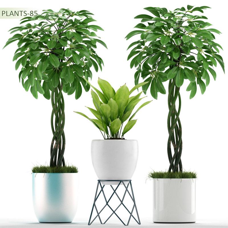 3d model plants 85