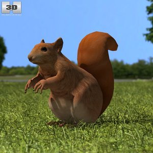 red squirrel squir 3d model