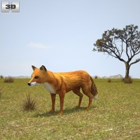 3d european red fox model