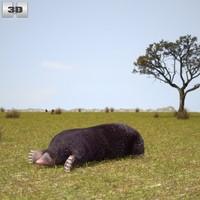 3d eastern mole model