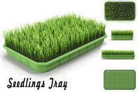 Seedlings Tray # 4