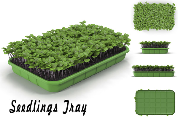 seedling tray 3d max