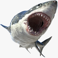 Great White Shark(Animated)(Rigged)