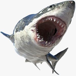 3d model of realistic shark rigged