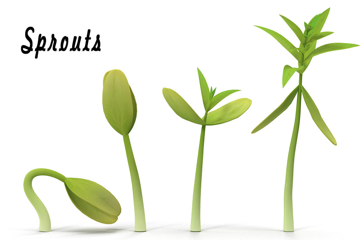 3d sprouts