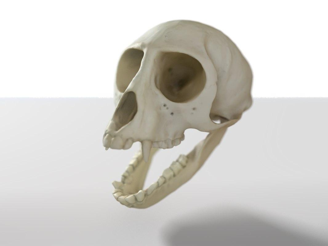 skull monkey 3d model