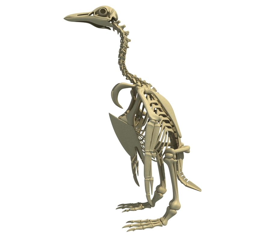 penguin skeleton 3d model