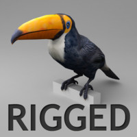 3d model of rigged toucan