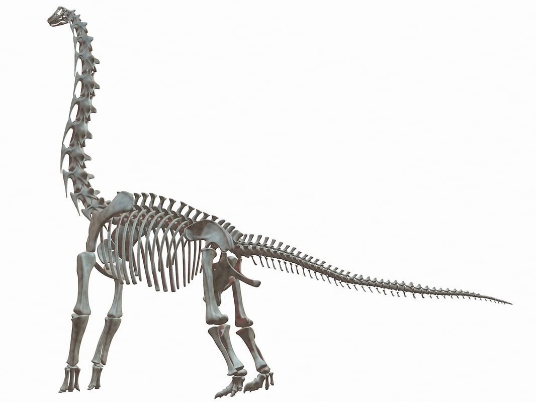 3d model brachiosaurus dinosaur skeleton