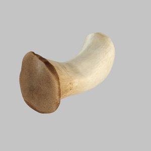 oyster mushroom 3d x