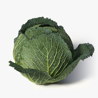 realistic cabbage 3d obj