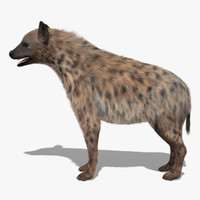 max spoted hyena fur