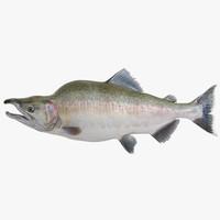 pink salmon 3d model