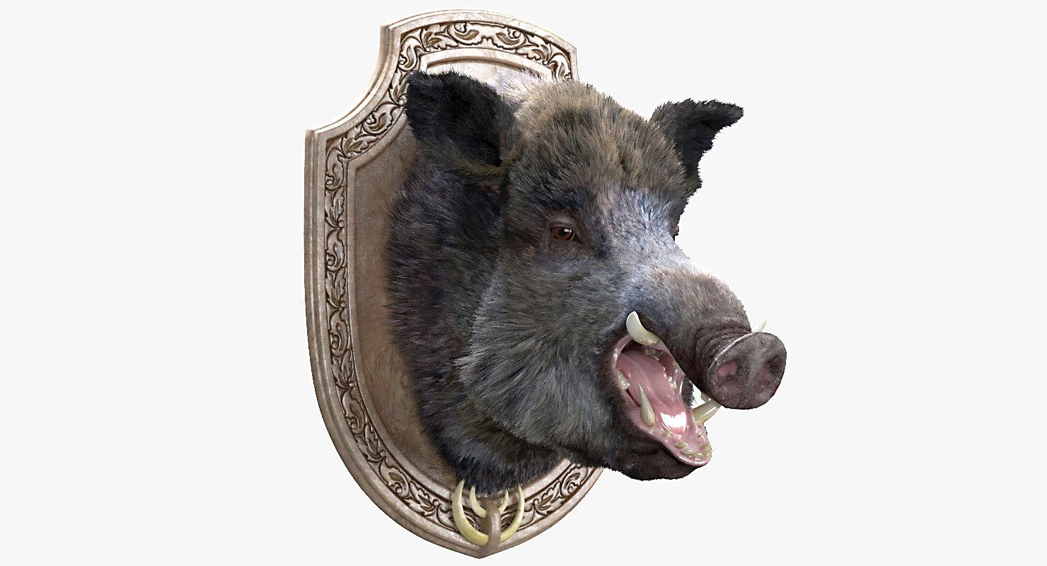 wild boar head max
