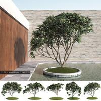 7 Plumeria-Frangipani Trees (+GrowFX)